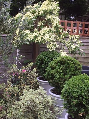 40 Ember Lane 300 - The National Garden Scheme - Find An Open Garden In Surrey