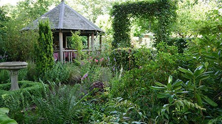 61 Wolsey Road 450 - The National Garden Scheme - Find An Open Garden In Surrey