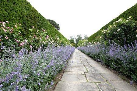 Dunsborough Park 450 - The National Garden Scheme - Find An Open Garden In Surrey