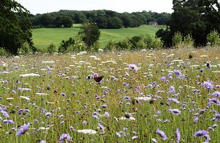 High Clandon Estate Vineyard 450 - The National Garden Scheme - Find An Open Garden In Surrey